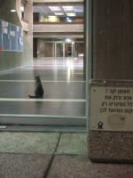 countingcats